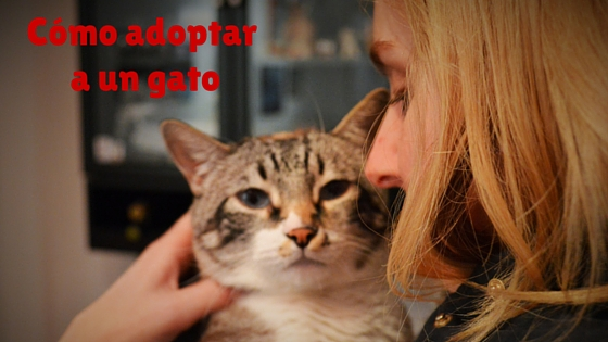 Blog sobre gatos