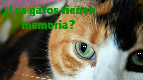 Blog sobre gatos memoria