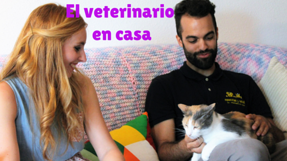 El veterinario en casa blog sobre gatos