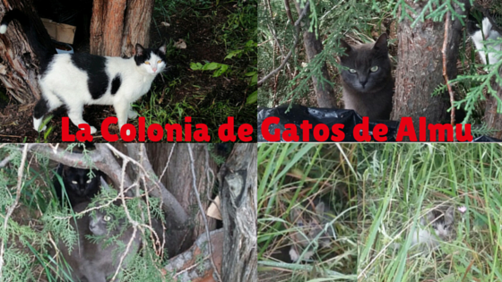 La colonia de gatos de Almu blog sobre gatos