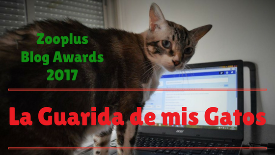 Zooplus blog awards 2017 la guarida de mis gatos blog sobre gatos