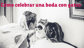 cómo celebrar una boda con gatos- blog sobre gatos- La Guarida de mis gatos