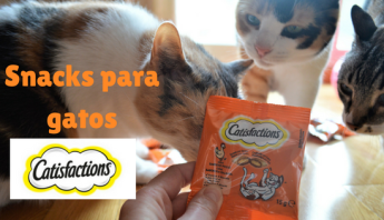Snacks para gatos Catisfaction
