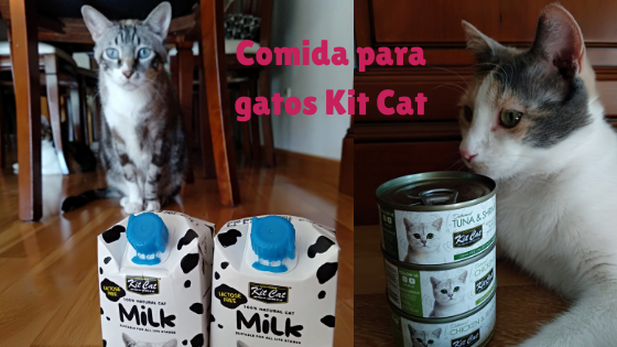 Comida para gatos Kit Cat- La Guarida de mis Gatos- Blog sobre gatos